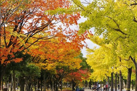 http://tetsuwanco.exblog.jp/19499310/