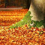 fall-foliage-1913485_640